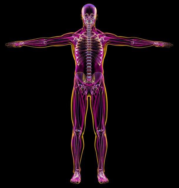 Conozca su sistema linfático: una parte clave del sistema inmunológico